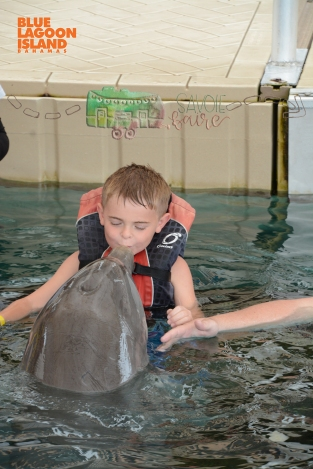 dolphin encounter 1