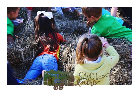 PENNIES IN A HAYSTACK - SAVOIE FAIRE BLOG